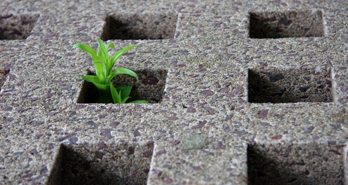 plant_growing_through_hole_in_cement.jpg